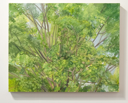 Sylvia Plimack Mangold / Sylvia Plimack-Mangold Maple Tree Detail 2008  2008 62 x 77 cm oil on linen