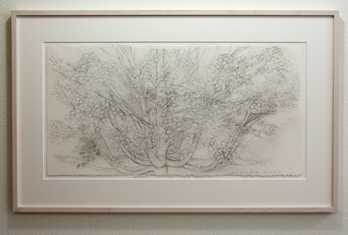 Sylvia Plimack-Mangold / Sylvia Plimack Mangold Maple Tree  2009  38.7 x 76.8 cm pencil on paper