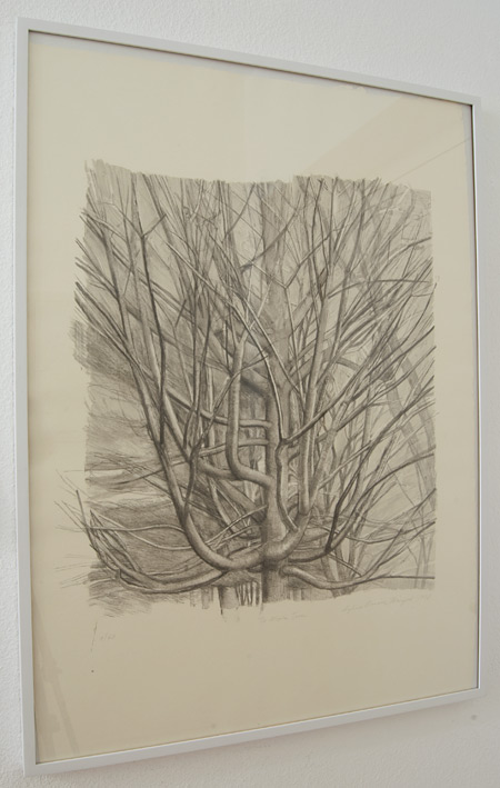 Sylvia Plimack-Mangold / Sylvia Plimack-Mangold The Maple Tree 1998  1998 81.3 x 59 cm lithograph Edition 9/40