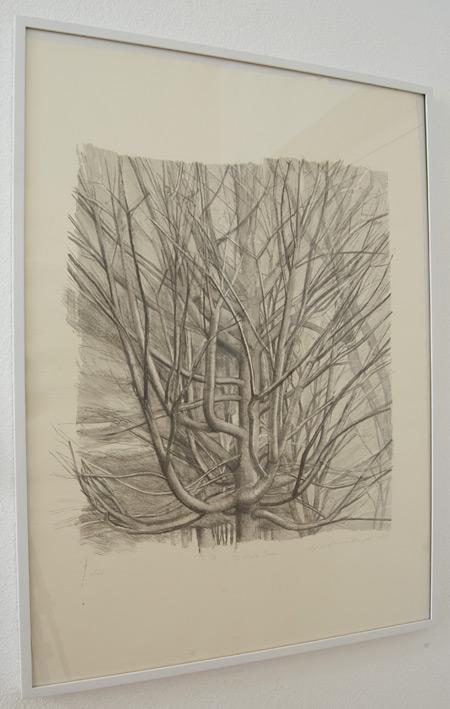 Sylvia Plimack Mangold / Sylvia Plimack-Mangold The Maple Tree 1998  1998 81.3 x 59 cm lithograph Edition 9/40
