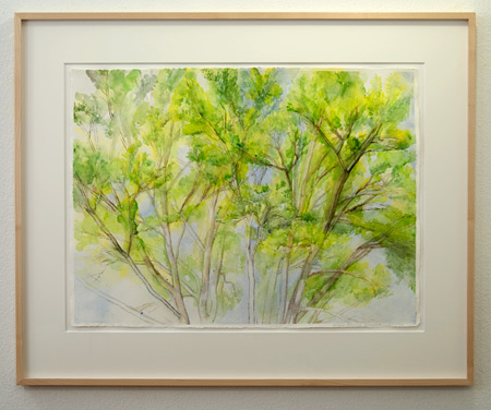 Sylvia Plimack-Mangold / Sylvia Plimack-Mangold The Pin Oak 6/15/02  2002 56 x 76.2 cm watercolor and pencil on paper