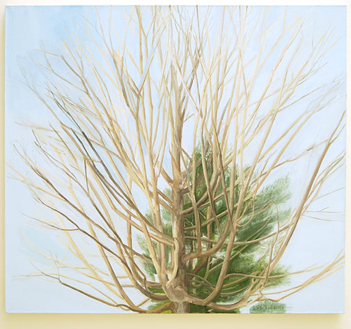 "Sylvia Plimack-Mangold / The Maple and Pine Trees   2003 - 2004 92 x 101.6 cm / 36.25 x 40 "" oil on linen"