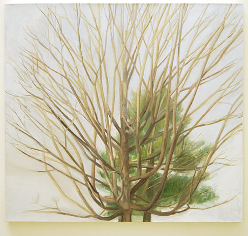 "Sylvia Plimack-Mangold / The Maple Tree with Pine  2006 91.4 x 101.6 x 4.5 cm / 36 x 40 "" oil on linen"