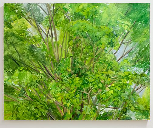 Sylvia Plimack-Mangold / Sylvia Plimack Mangold Maple Tree Detail 2008  2008 62 x 77 cm oil on linen